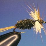 FLY OF THE MONTH- November 2017