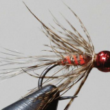 FLY OF THE MONTH- August 2018