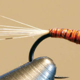FLY OF THE MONTH- November 2018
