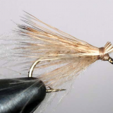 FLY OF THE MONTH- December-2018