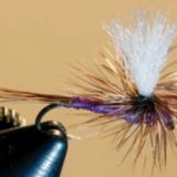 FLY OF THE MONTH- August- 2019
